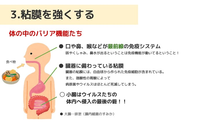 身体の様々な免疫機能